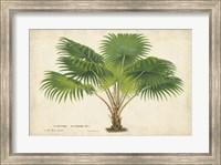 Palm of the Tropics V Fine Art Print