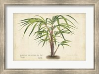 Palm of the Tropics VI Fine Art Print