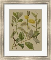 Forest Foliage II Fine Art Print