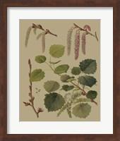 Forest Foliage IV Fine Art Print