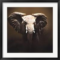 On Safari Fine Art Print