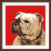 The British Bulldog, Red Fine Art Print
