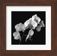 Orchid Illusion I Fine Art Print