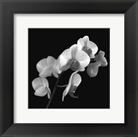 Orchid Illusion I Fine Art Print