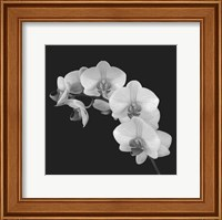 Orchid Illusion II Fine Art Print
