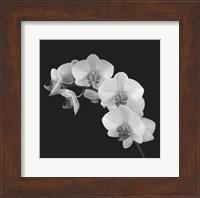 Orchid Illusion II Fine Art Print