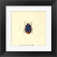 Cimex Oleraceus Fine Art Print