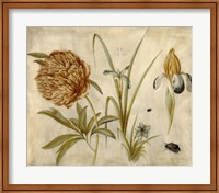 Flowers and Beetles Fine Art Print