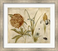 Flowers and Beetles Fine Art Print