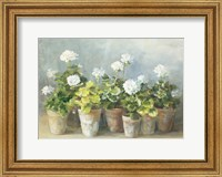 White Geraniums Fine Art Print