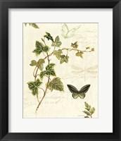 Ivies and Ferns IV Fine Art Print