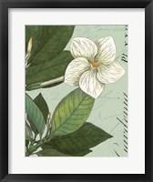 Botanique Bleu III Fine Art Print