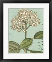 Botanique Bleu IV Fine Art Print