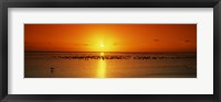 Flock of seagulls on the beach at sunset, South Padre Island, Texas, USA Fine Art Print