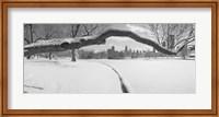 Bare trees in a park, Lincoln Park, Chicago, Illinois, USA Fine Art Print