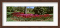 Azalea and Tulip Flowers in a park, Sherwood Gardens, Baltimore, Maryland, USA Fine Art Print