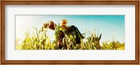 Scarecrow in a corn field, Queens County Farm, Queens, New York City, New York State, USA Fine Art Print