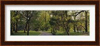 Trees In A Park, Central Park, NYC, New York City, New York State, USA Fine Art Print