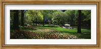 Flowers in a park, Central Park, Manhattan, New York City, New York State, USA Fine Art Print