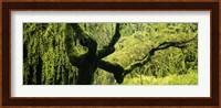 Moss growing on the trunk of a Weeping Willow tree, Japanese Garden, Washington Park, Portland, Oregon, USA Fine Art Print