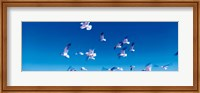 Birds in flight Flagler Beach FL USA Fine Art Print