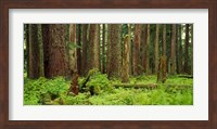 Forest floor Olympic National Park WA USA Fine Art Print