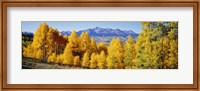 Fall Aspen Trees Telluride CO Fine Art Print