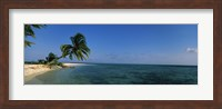Palm tree overhanging on the beach, Laughing Bird Caye, Victoria Channel, Belize Fine Art Print