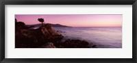 Silhouette of a cypress tree at coast, The Lone Cypress, 17 mile Drive, Carmel, California, USA Fine Art Print