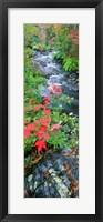 River flowing through a forest, Black River, Upper Peninsula, Michigan (vertical) Fine Art Print