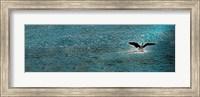 Bird taking off over water Fine Art Print