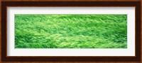 Wheat Field Prince Edward Island Canada Fine Art Print