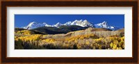 USA, Colorado, Rocky Mountains, aspens, autumn Fine Art Print