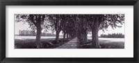 Road Through Trees, Provence, France Fine Art Print