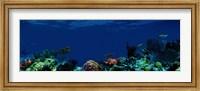 Underwater Fine Art Print