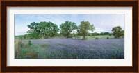 Field of Bluebonnet flowers, Texas, USA Fine Art Print