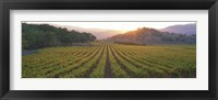 Sunset, Vineyard, Napa Valley, California, USA Fine Art Print