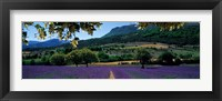 Mountain behind a lavender field, Provence, France Fine Art Print