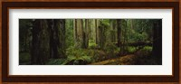 Hoh Rainforest Trees, Olympic National Park Fine Art Print