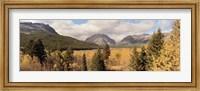 Trees in a field, US Glacier National Park, Montana, USA Fine Art Print