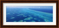 Coral reef in the sea, Belize Barrier Reef, Ambergris Caye, Caribbean Sea, Belize Fine Art Print