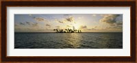 Silhouette of palm trees on an island, Placencia, Laughing Bird Caye, Victoria Channel, Belize Fine Art Print