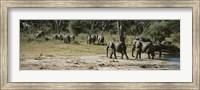 African elephants (Loxodonta africana) in a forest, Hwange National Park, Matabeleland North, Zimbabwe Fine Art Print