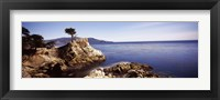 Cypress tree at the coast, The Lone Cypress, 17 mile Drive, Carmel, California Fine Art Print
