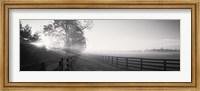 Ranch at dawn, Woodford County, Kentucky, USA Fine Art Print