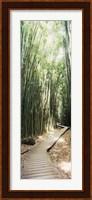 Trail in a bamboo forest, Hana Coast, Maui, Hawaii, USA Fine Art Print