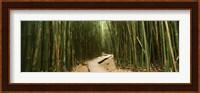 Wooden path surrounded by bamboo, Oheo Gulch, Seven Sacred Pools, Hana, Maui, Hawaii, USA Fine Art Print