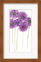 Pinwheels II Fine Art Print