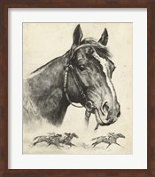 Gallant Fox Fine Art Print