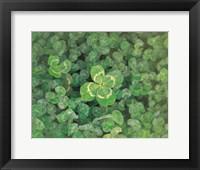 Close up of green clover Fine Art Print